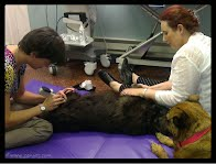 Trigger point therapy, dog, acupuncture, stretching
